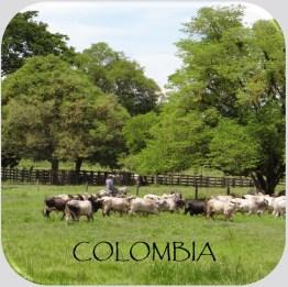 horizonte-colombia