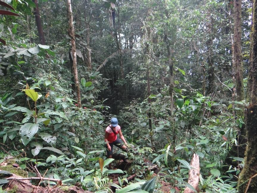 Con los cinco sentidos en la selvatropical