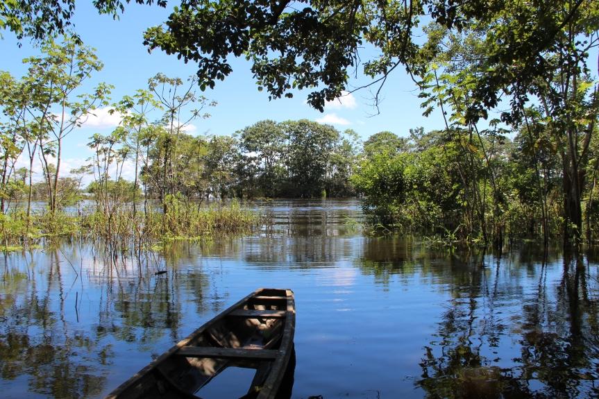 Inmersión en medio de la selvaamazónica